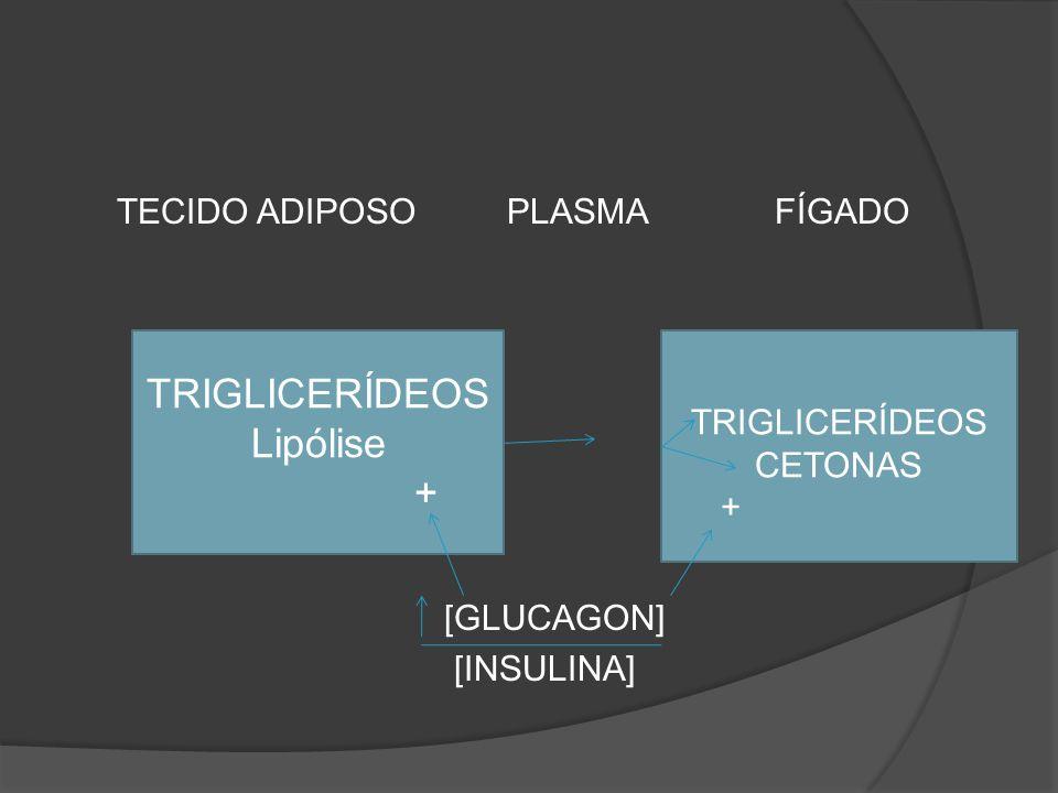 TRIGLICERÍDEOS Lipólise + TECIDO ADIPOSO PLASMA FÍGADO [GLUCAGON]
